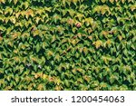 texture of leaves of a plant of ... | Shutterstock . vector #1200454063