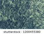 texture of bushes of a plant of ... | Shutterstock . vector #1200455380