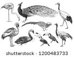 birds from wild set. realistic... | Shutterstock .eps vector #1200483733