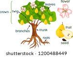 parts of plant. morphology of... | Shutterstock .eps vector #1200488449