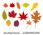 colorful autumn leaves... | Shutterstock .eps vector #1200490240