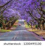 Pretoria Jacaranda Street   It...