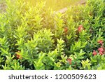blurred image of nature view  ... | Shutterstock . vector #1200509623