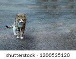 portrait of shaggy cat on a... | Shutterstock . vector #1200535120