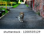portrait of shaggy cat on the... | Shutterstock . vector #1200535129