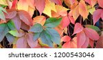 colorful red  yellow  green...   Shutterstock . vector #1200543046