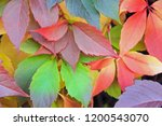 colorful red  yellow  green...   Shutterstock . vector #1200543070