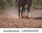 brown horse feet making dust in ...   Shutterstock . vector #1200544339