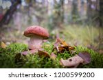 mushroom in the autumn forest. | Shutterstock . vector #1200599200