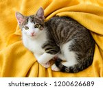 Stock photo cute little kitten on soft yellow plaid at home top view 1200626689