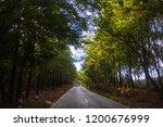 mountains roads daytime forest... | Shutterstock . vector #1200676999