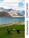 pangong lake in ladakh  north... | Shutterstock . vector #1200726490