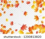 maple leaves vector  autumn... | Shutterstock .eps vector #1200813820