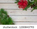 Spruce boughs in the l upper...
