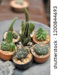 collection of various cactus... | Shutterstock . vector #1200844693