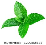 mint leaves isolated on white.... | Shutterstock . vector #1200865876