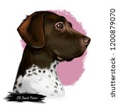 old danish pointer dog with...   Shutterstock . vector #1200879070