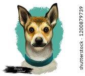 norwegian lundehund wearing...   Shutterstock . vector #1200879739