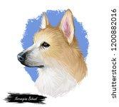 norwegian  buhund canine...   Shutterstock . vector #1200882016