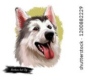 northern inuit dog  watercolor... | Shutterstock . vector #1200882229