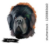 newfoundland dog with large...   Shutterstock . vector #1200883660