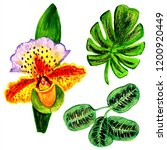 exotic flowers and leaves in... | Shutterstock . vector #1200920449