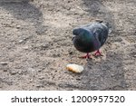 pigeons flew to the place of... | Shutterstock . vector #1200957520