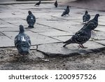 pigeons flew to the place of... | Shutterstock . vector #1200957526