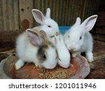 Stock photo baby rabbits in farm thailand phrae 1201011946