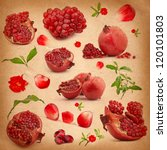 collection of red pomegranate... | Shutterstock . vector #120101803