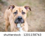a tan and white terrier mixed... | Shutterstock . vector #1201158763