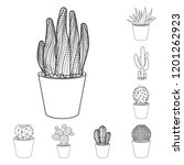 isolated object of cactus and...   Shutterstock .eps vector #1201262923