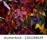 the amazing colors of the... | Shutterstock . vector #1201288639