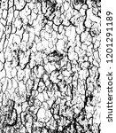 tree bark texture background... | Shutterstock .eps vector #1201291189
