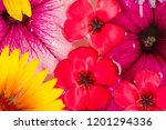 field and meadow flowers  torn... | Shutterstock . vector #1201294336