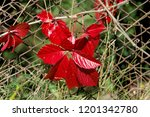 brightly red and green autumn... | Shutterstock . vector #1201342780