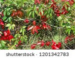 brightly red and green autumn... | Shutterstock . vector #1201342783