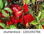 brightly red and green autumn... | Shutterstock . vector #1201342786