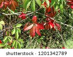 brightly red and green autumn... | Shutterstock . vector #1201342789
