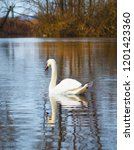 white swan on the river.a flock ... | Shutterstock . vector #1201423360