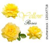 Roses Set Yellow