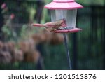 female northern cardinal... | Shutterstock . vector #1201513876