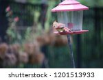 female northern cardinal... | Shutterstock . vector #1201513933