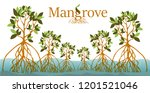 Mangrove Forest Background....