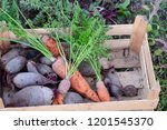 orange carrots and beets in a... | Shutterstock . vector #1201545370