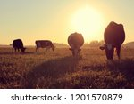silhouettes of dairy pair... | Shutterstock . vector #1201570879
