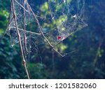 Spider Web On The Tree In The...