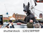 xolo the giant dog climbs up... | Shutterstock . vector #1201589989