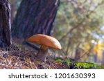 large mushroom grow in forest.... | Shutterstock . vector #1201630393