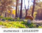 mushroom grow in sun rays.... | Shutterstock . vector #1201630399